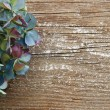 Colorful dried Hydrangea against rustic wood with copy space - Stock Photo