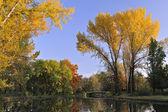 золотые листья — Стоковое фото