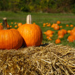 Pumpkins on top of hay bale with pumpkin patch in background — Stock Photo #4158751