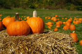 Pumpkins on top of hay bale with pumpkin patch in background — Stock Photo