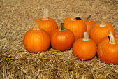 Ripe orange pumpkins on brown hay bales — Stock Photo