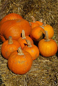 Group of orange pumpkins on brown hay bales — Stock Photo