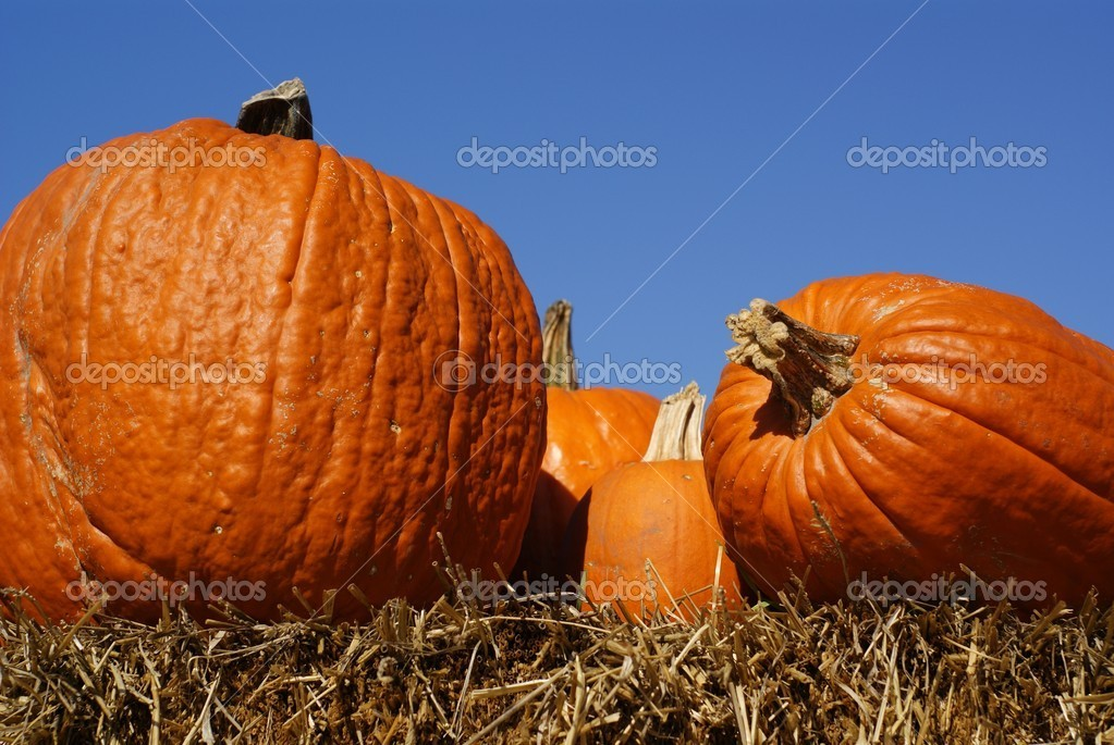 Orange pumpkins on hay bales in closeup with blue sky backdrop — Stock Photo #4158773