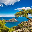 Pine on the cliff, sea, Crimea - Stockfoto