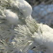 Frost on Pine — Stock Photo #4156793