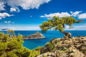Pine on the cliff, sea, Crimea — Stock Photo