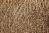 Carpet texture for background — Stock Photo