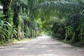 Shady street with many trees — Stock Photo