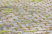 Block pavement — Stock Photo