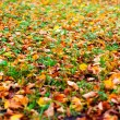Stock Photo: Grass and abscissed leaves