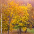 Stockfoto: Autumn landscape # 3