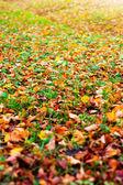 Gräs och abscissed blad — Stockfoto