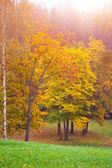 Autumn landscape # 3 — Photo