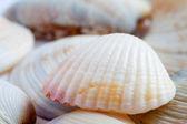 Geribde shell heap macro — Stockfoto