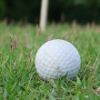 Stock Photo: Golf ball, golf