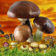 Funny mushroom meadow, concept background — Stock Photo