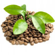 Coffee grains and coffee leaf — Stock Photo