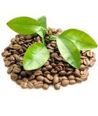 Coffee grains and coffee leaf — Stock Photo