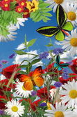 A beautiful garden illustration, flowers, butterflies — Stock Photo