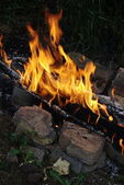 Fire on nature — Stock Photo