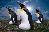 Emperor's four penguins on sea wave background — Stock Photo