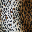 Leopard fur — Stock Photo #5350630