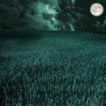 Moon in field — Stock Photo #5354401