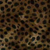 FurLeopard — Stock Photo