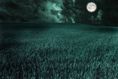 Moon in field — Stock Photo
