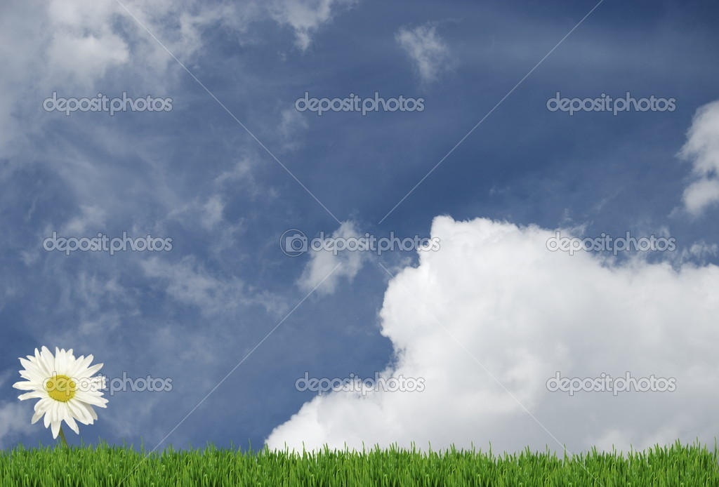 Field of daisies and perfect sky  Stock Photo #5354296