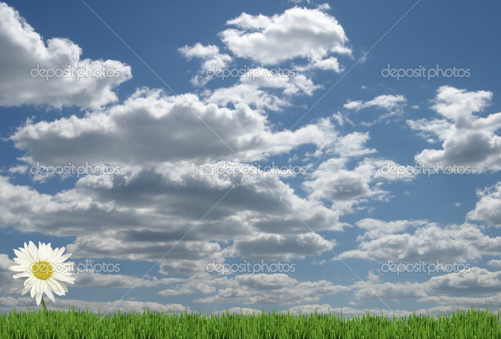 Field of daisies and perfect sky — Stock Photo #5354307