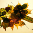 Autumn leaves on old paper - Stock Photo