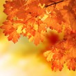 Abstract autumn maple branch — Stock Photo