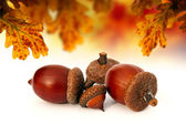 Isolated abstract acorns — Stock Photo