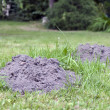 Molehills — Stock Photo