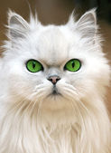 Green Eyes — Stockfoto