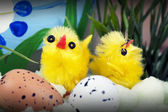 Easter setting with chicks and eggs — Stock Photo