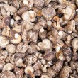 Dried Mushrooms — Stock Photo #5146203