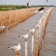 Seagulls hold on bamboo in sea , Thailand (vertical) - Stock Photo