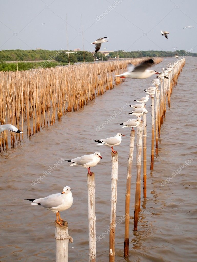 Seagulls hold on bamboo in sea at Bang Pu Seaside Resort , Samut Prakan provinces in Thailand. (Vertical)  Stock Photo #5200050