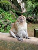 Monkey is sitting on the wall — Stock Photo