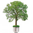 Eco concept: tree grows out of the light bulb — Stock Photo #4103479