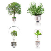 Eco concept: variety of light bulbs with plant inside — Stock Photo