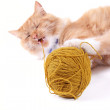 Cat playing with ball of wool — Stock Photo