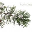 Foto Stock: Pine tree branch covered with snow and text - Merry Christmas