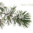 Pine tree branch covered with snow and text - Merry Christmas — Photo