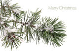 Pine tree branch covered with snow and text - Merry Christmas — Stock Photo