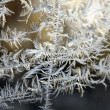 Stock Photo: Frost pattern on a winter window