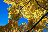 Beautiful autum leaves against sky — Stock Photo