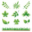 Green Grass and Leaves Collection — Stock Vector